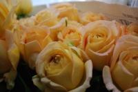 rose03.JPG