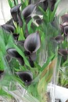 黒カラー.JPG